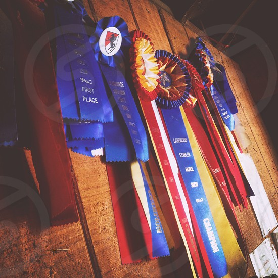 Horse show ribbons blue  red 1st 2nd hunter jumpers  photo