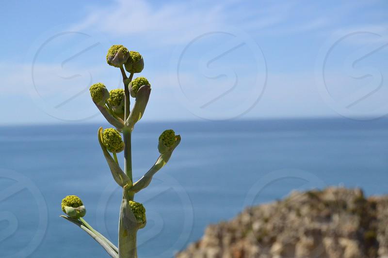 Flor en la playa del Algarve photo