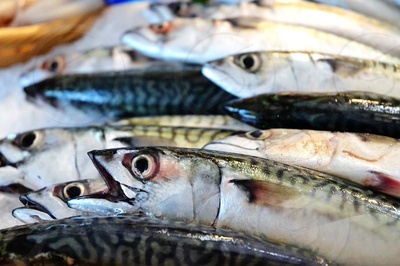 Fish markets photo
