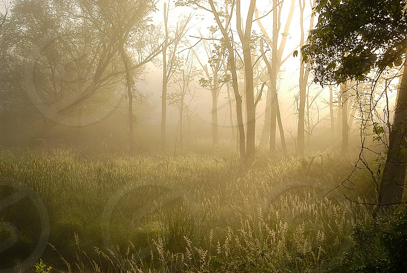 Golden sunlight. photo