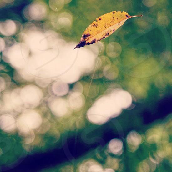 Falling into Autumn photo