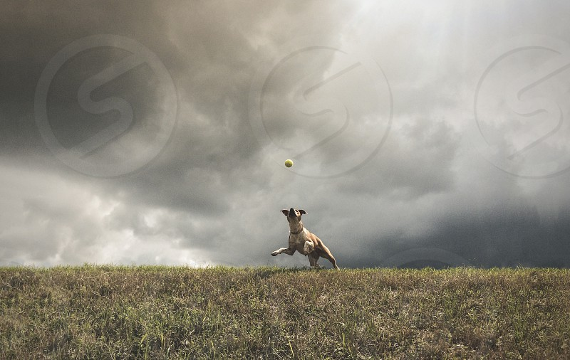 dog catch pet play playing walk walking jump sky clouds cloudy hill grass ball catching playing catch animal animals pets  photo