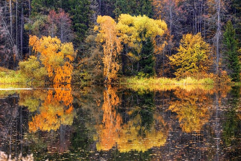 Autumn landscapes with forest and pond photo