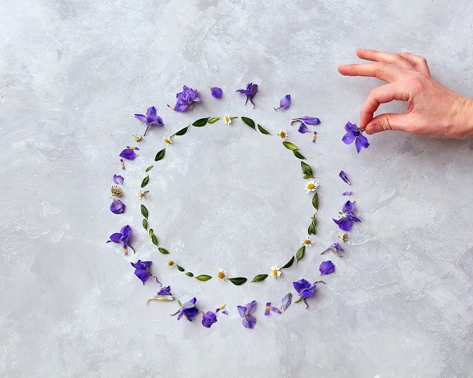 Frame of spring violet flowers on a gray background with space for text flat lay photo