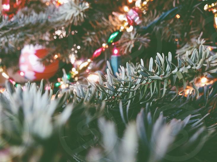 multicolored christmas lights photo