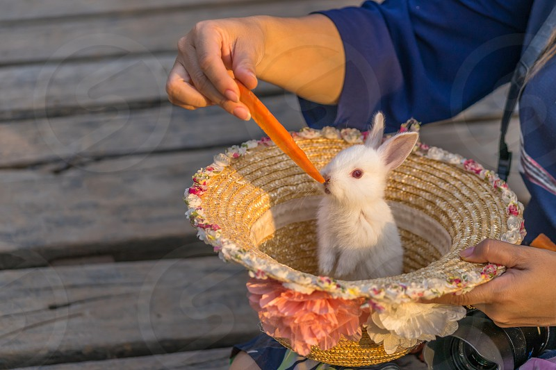 An Easter bunny in a hat. photo