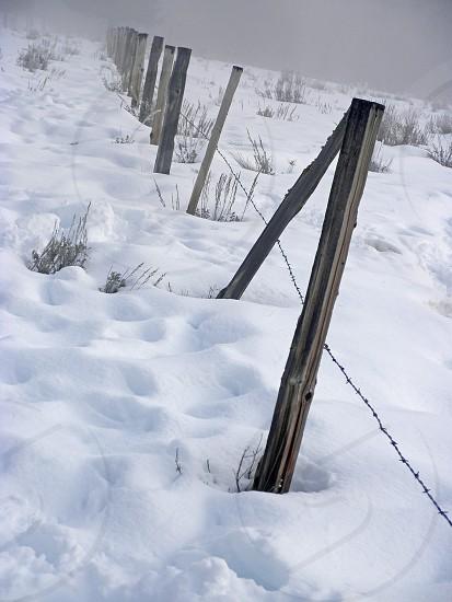 winter winter snow snow fog fence posts snow storm photo