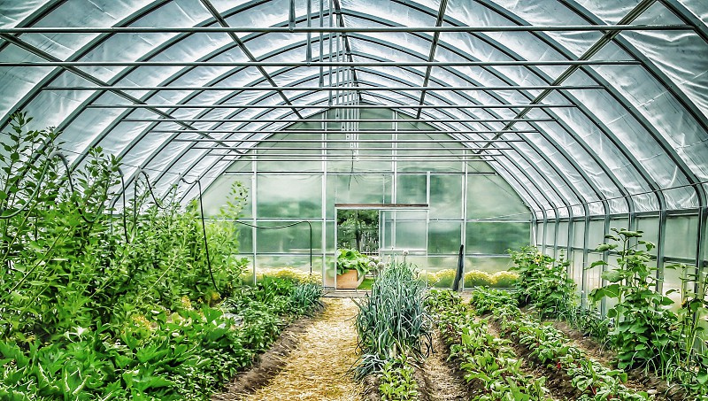 green plants in greenhouse photo