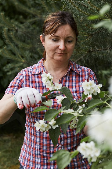 Woman working in a backyard garden using secateurs trimming plants. Candid people real moments authentic situations photo