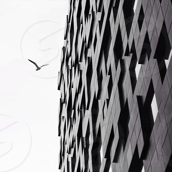 bird flying beside building photograph photo