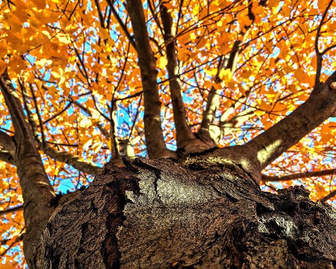 Autumn in CT photo