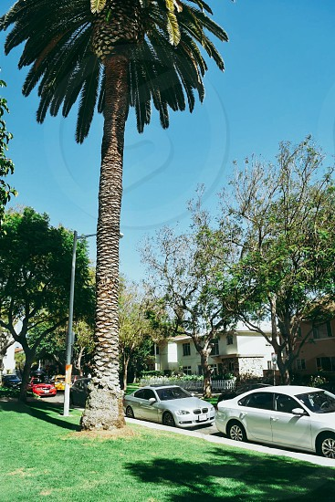 Vibrant California Palm tree cars neighborhood street hollywoood suburbs perfect picturesque  photo