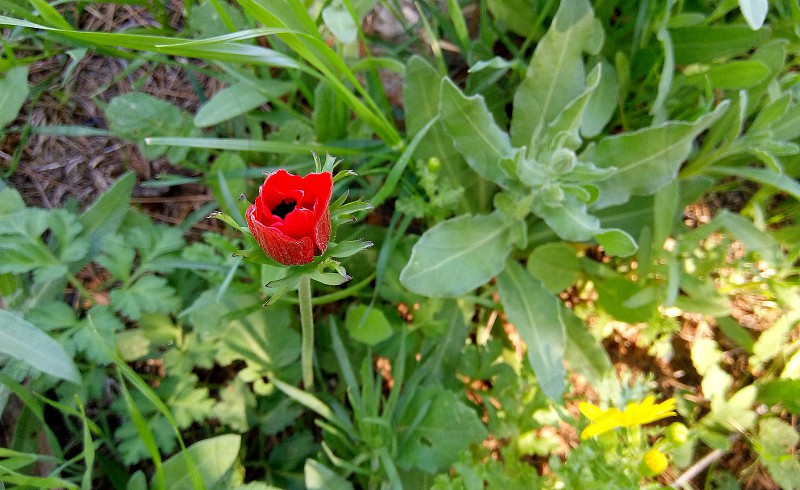 A red small flower but it stood out greatly photo