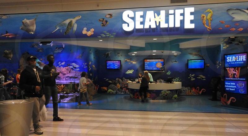 Sea Life In Mall Of America photo