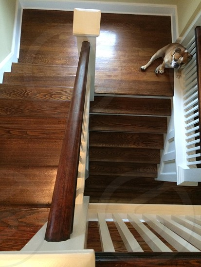 brown wooden staircase photo