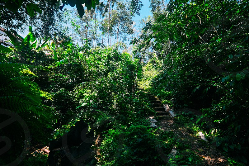 Jungle steps Ubud Bali. photo