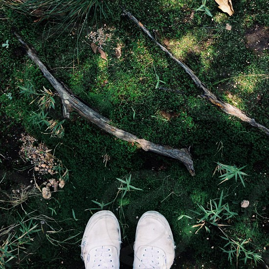 view of brown wooden stick photo