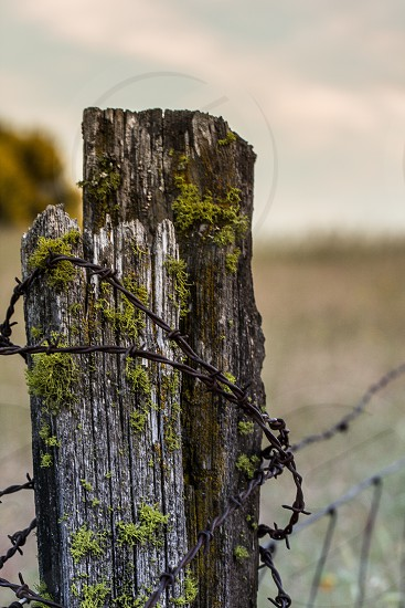 fence post barbed wire detail photo