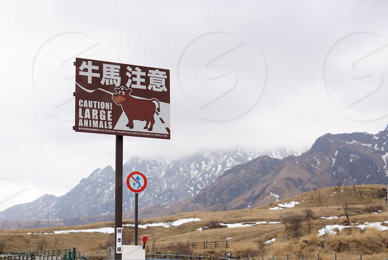 brown and white caution large animals road sign photo