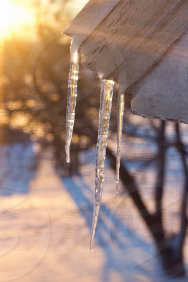 Icicles from a roof overhang against golden sunlight streaming over a snow-covered field bare trees in blurred background  photo