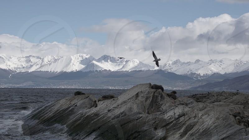 Penguins at Isla Martillo Beagle Channel Ushuaia Patagonia Tierra del Fuego Argentina                    photo