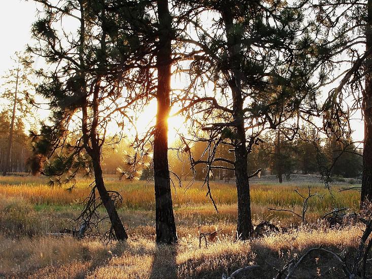 Sunrise through the trees photo