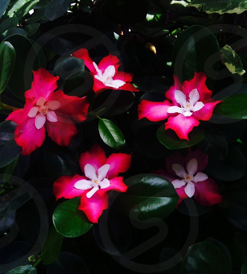 Spring mixed flowers  photo