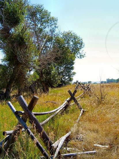 Field with wooden fence photo