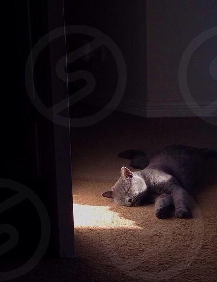 Kitten sleeping in a warm sunny spot photo