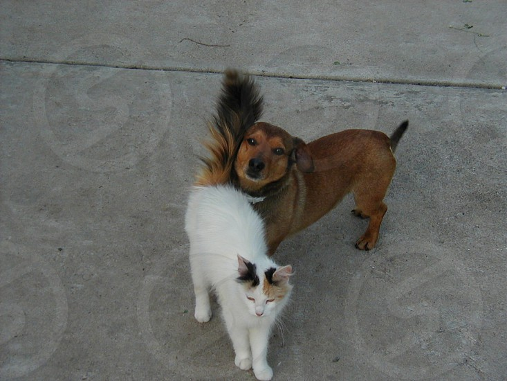 Dog and cat are friends. photo
