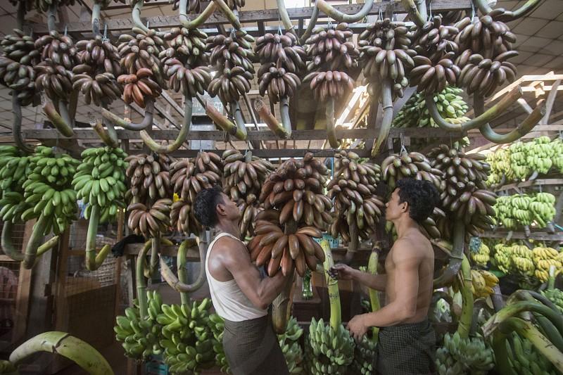 a big Banana Shop in a Market near the City of Yangon in Myanmar in Southeastasia. photo