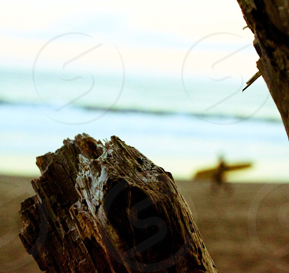 brown driftwood near body of water closeup photography photo