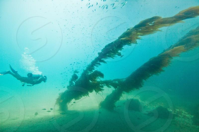 person scuba diving underwater photo
