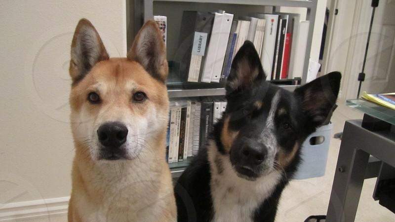 Kodi and Kaia - Besties photo