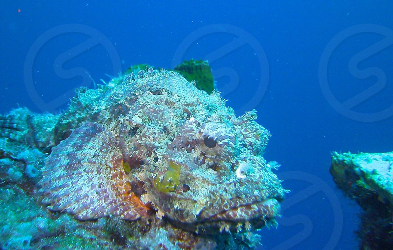 This cost me a large red stomach burn due to having to steady myself on the wreck as we had light drifts... The fire coral burn will heal but this picture of a large rock fish will last forever...(-: photo