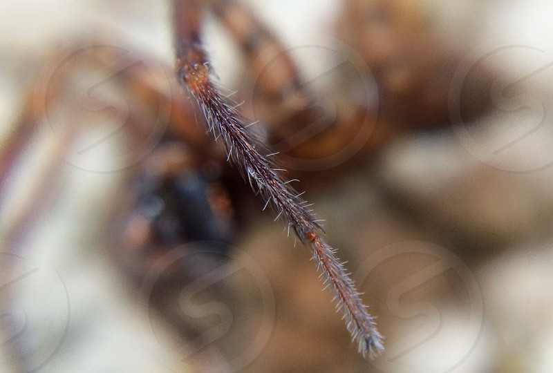 brown spider leg photo