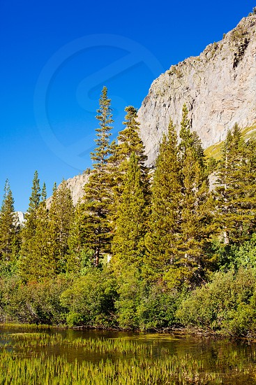 green pine trees by the lake near rocky cliff photo