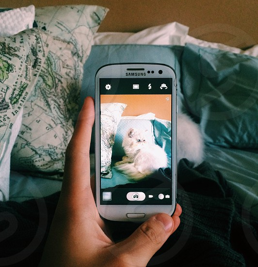 person taking photo of white cat on white samsung galaxy android smartphone photo
