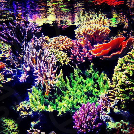 sea corals photography photo