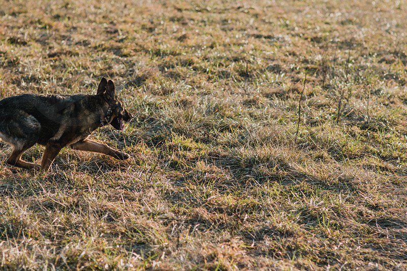 Dog sneaking in the grass. photo