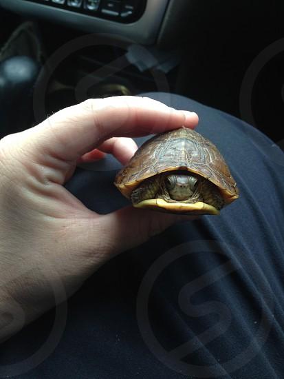 Box TurtleOklahomaI Brake For Turtles photo