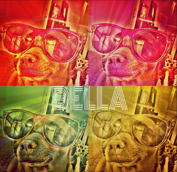 Dog sunglasses 70s art bella disco funky fresh  photo