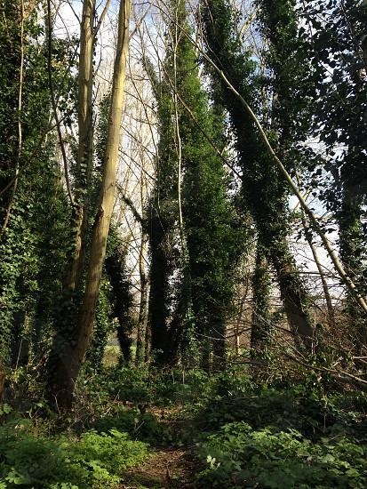 Walking through the woods  photo
