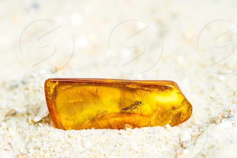 amber stone with insect photo