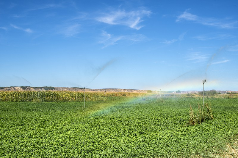 Watering sprinklers on the field. Green plants and rainbow photo