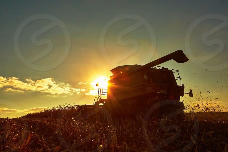harvester harvesting corn land ripe monoculture dust agriculture autumn machinery yellow field trailer crop combine farm sun landscaped vehicle equipment agricultural seed gold growth plant picking rural machine transportation sky cultivated working scene food metal cereal photo