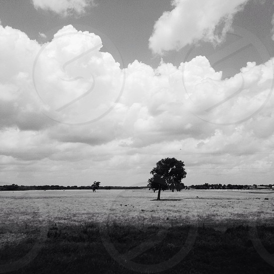 view of a tree in the middle of the field photo