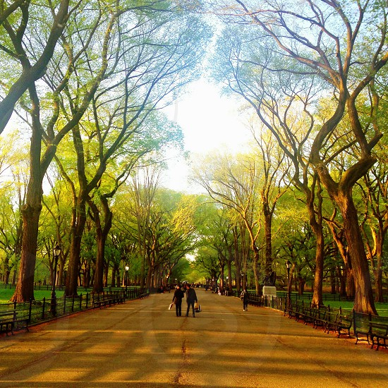 Strolling through Central Park NYC. photo