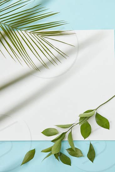 piece of white cardboard on a blue background decorated with a branch with leaves and a palm tree. With a place under the text flat lay photo