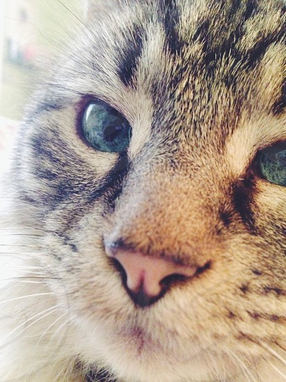 Cat close-up on face photo